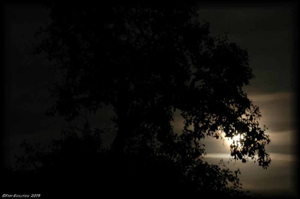Lune - Pause courte