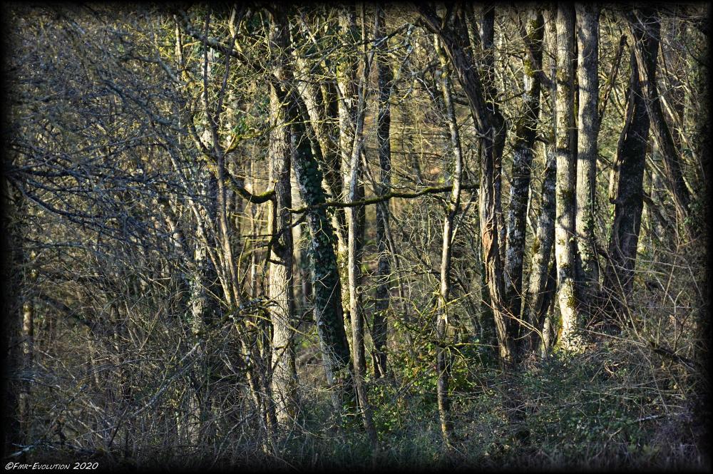 Forêt - Bonneveaux