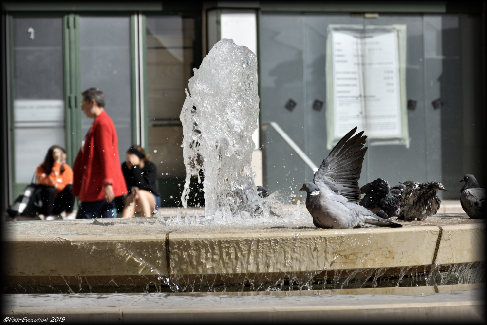 Fontaine - Poitiers