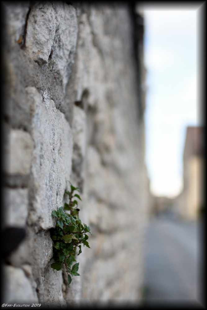 Végétation - Poitiers