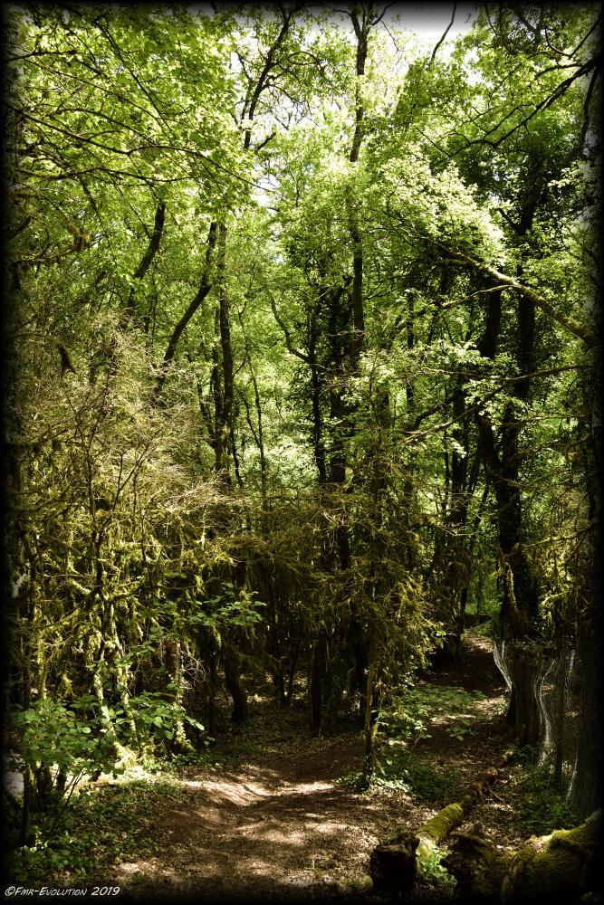 Vouneuil sous Biard - chemin