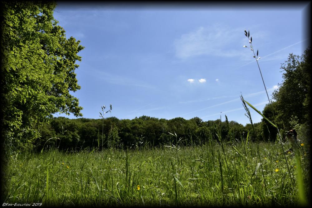 Vouneuil sous Biard - Prairie