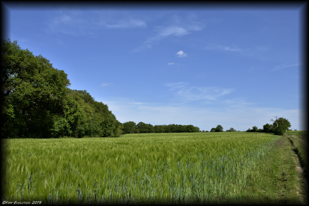 Vouneuil sous Biard - Champ