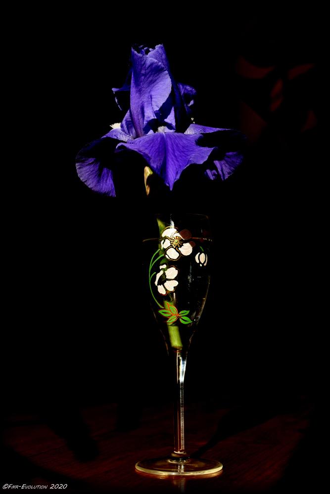 Iris - ombre et lumière