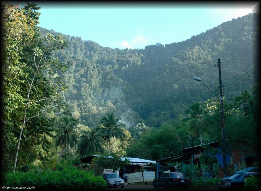 Maracas Bay - Mur végétal