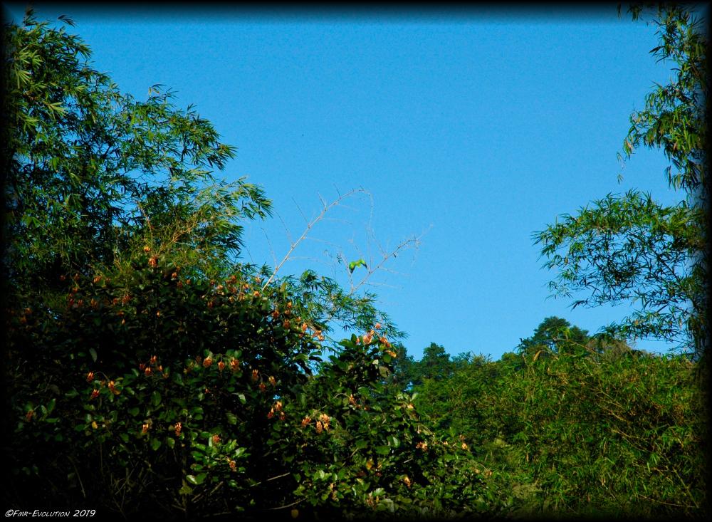 Maracas Bay - perroquet