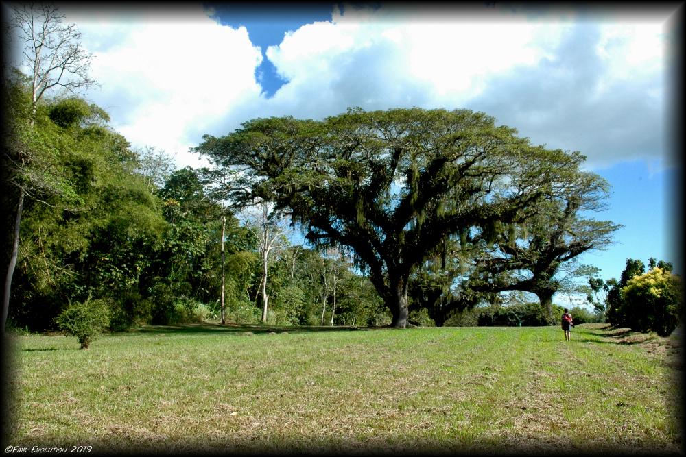 Chaguaramas Natural Parc