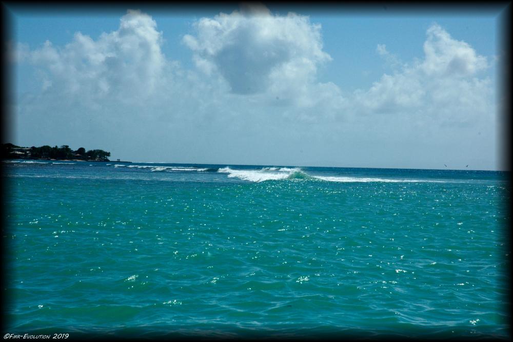 Tobago - Barrière de corail