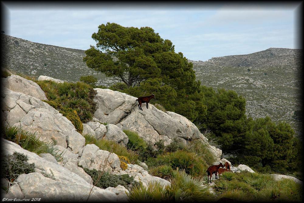 Sant Elm - Majorque
