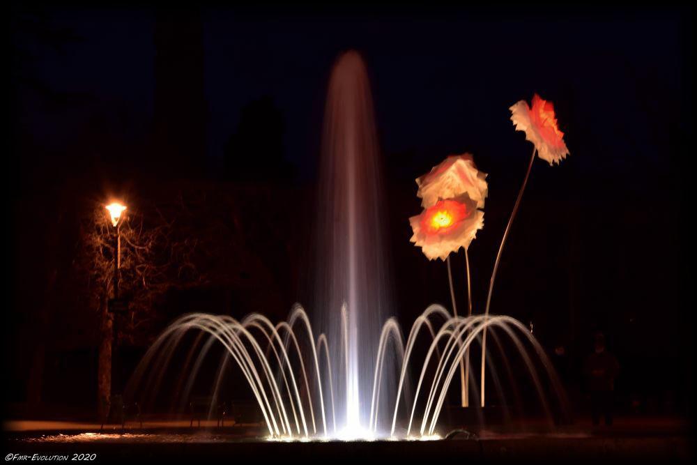 Fleurs sur Blossac - Poitiers la Nuit