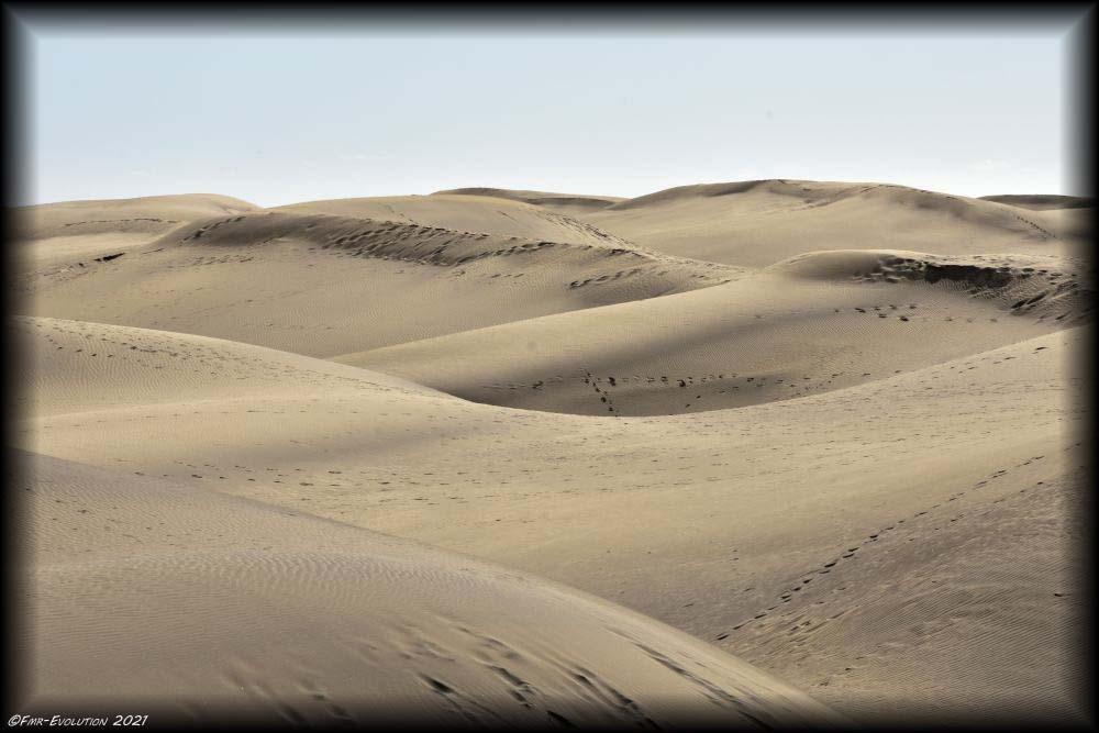 Dunes - Mas Palomas