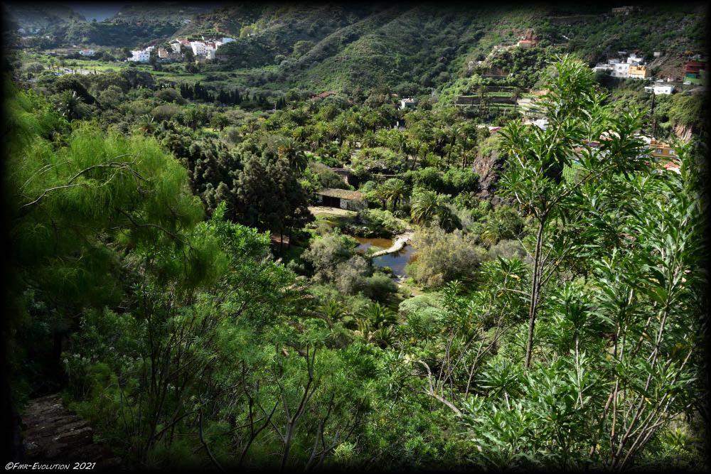 Jardin Botanique Viera y clavijo